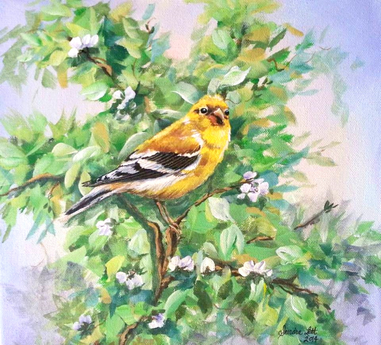 Goldfinch Female