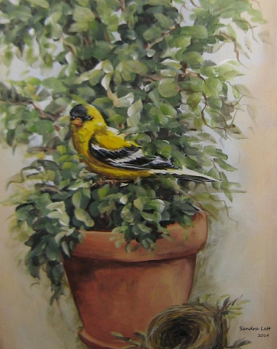 Goldfinch Perching