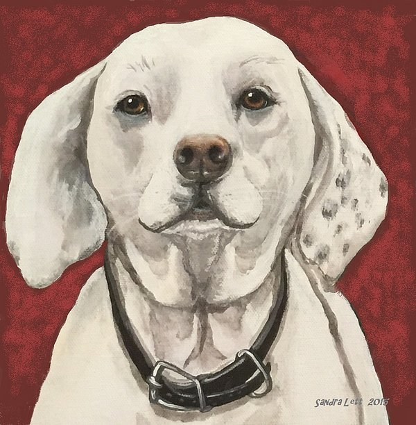 Dog Portrait I