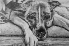 Dessie Dog