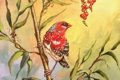 Exotic Red Bird